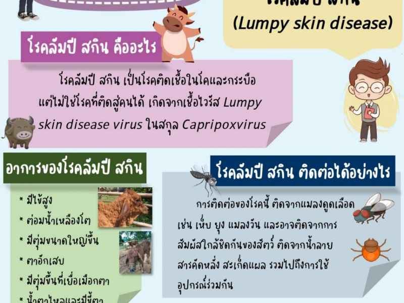 โรคลัมปี สกิน (Lumpy lkin disease)